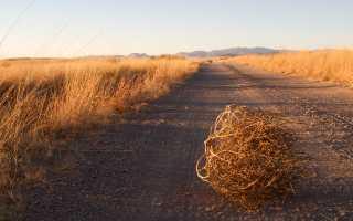 Дополнительные источники питания: Улей и пчёлы