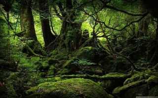 История выживания: Йосси Гинсберг. 3 недели в джунглях Амазонки