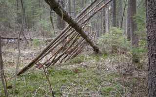 Организация лагеря и укрытие от непогоды в лесу
