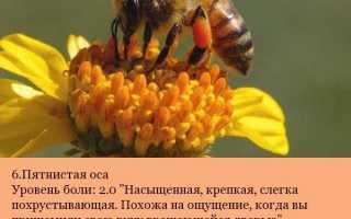 Топ — 5 насекомых с самыми болезненными укусами