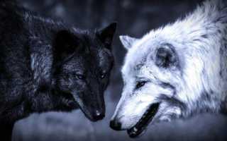 Хозяева леса: дикие животные, опасные для человека