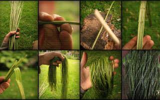 Плетение верёвки своими руками из коры дерева