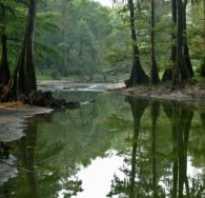 Как найти воду в лесу? Часть 1