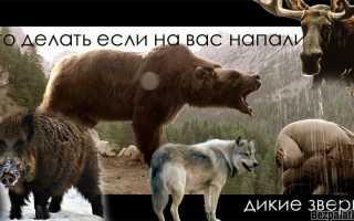 Дикие животные в лесу: охота на небольшого зверя