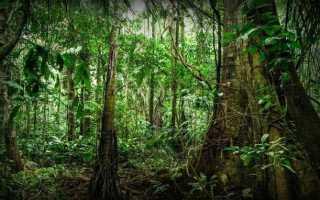 История выживания: Джулиана Кёпке. Выжить в авиакатастрофе и джунглях