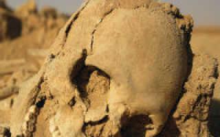 Пустыня — как выжить без воды и под палящим солнцем?