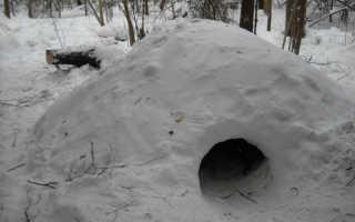 Выживание и питание в зимнем лесу без ружья