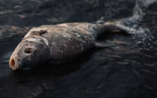 Пособие по выживанию армии США. Опасная рыба и моллюски