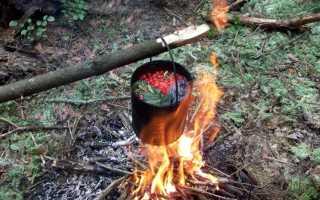 Как найти еду в лесу