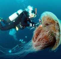 Экстремальные источники питания: Медузы
