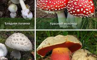 Ядовитые грибы. Краткий обзор
