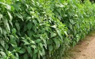Огород выживальщика: Топинамбур