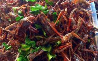 Съедобные насекомые: правила употребления насекомых в пищу