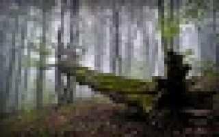 Русский стиль выживания: Заготовка дров без пилы и топора
